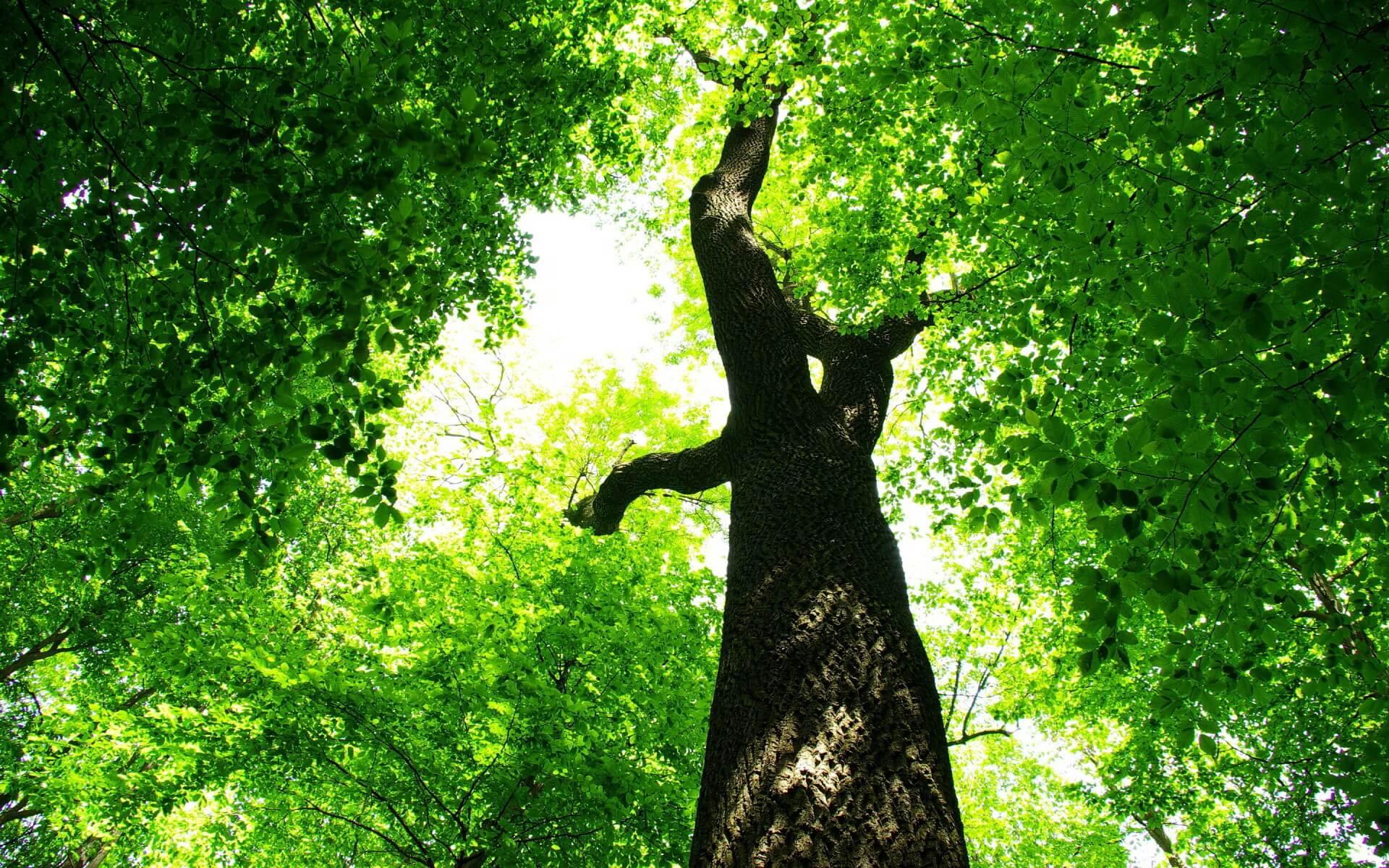 6981882-summer-green-tree-foliage